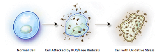 cell with oxidative stress