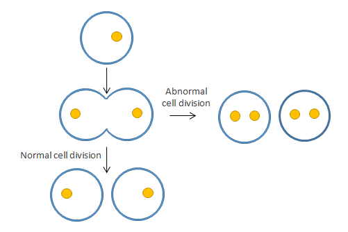 normal and abnormal cell division from embryo